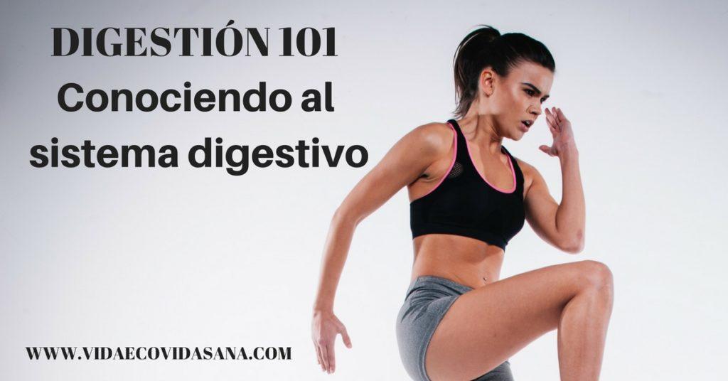 Conociendo al sistema digestivo digestion 101 facebook